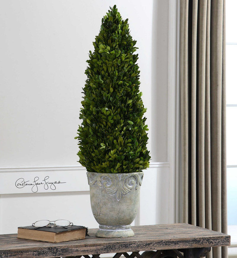 Preserved Boxwood Cone Topiary (4490712055904)