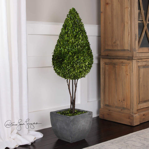 Preserved Boxwood, Teardrop Topiary