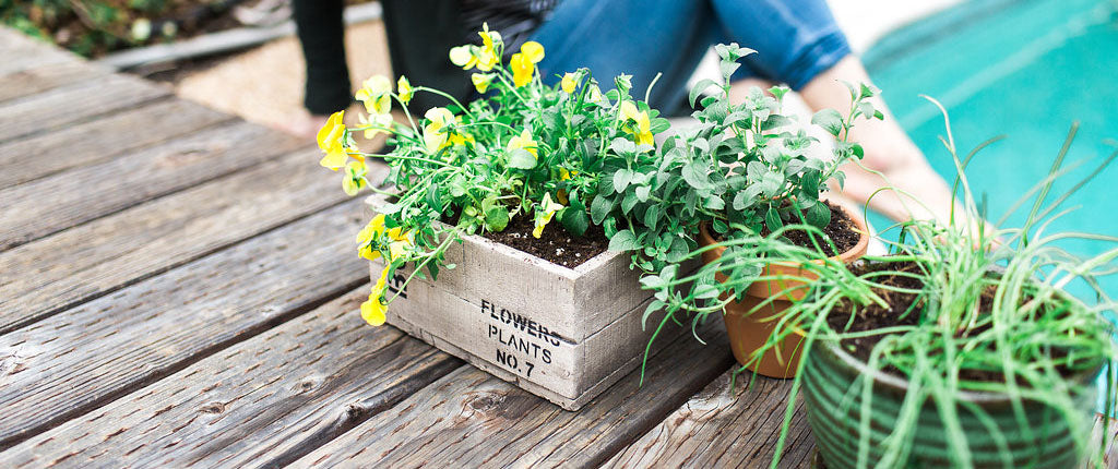 Ecoscraps using ecoscraps organic potting mix in container gardening potting mix is used when growing plants herbs and vegetables in containers you may be asking why not just use soil from my garden workwithnaturefo