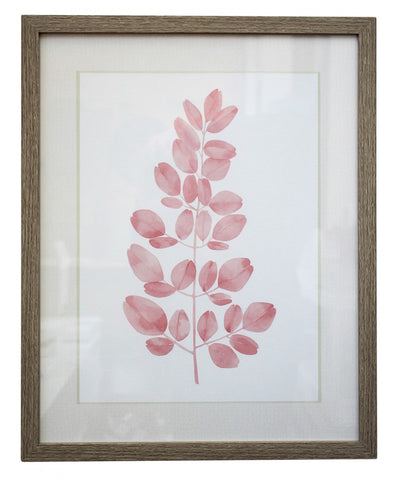 Blush 2 Framed Print