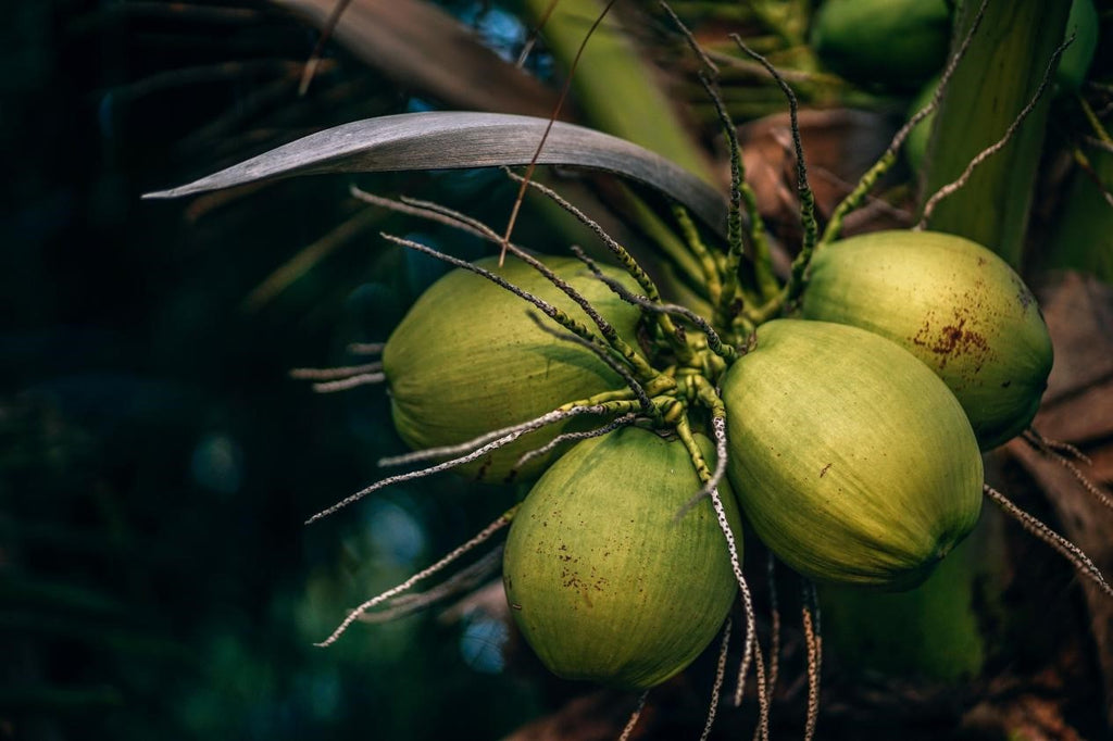 Benefits of Coconut and Coconut Products