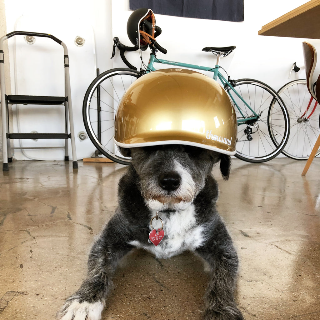 Thousand Helmets office dog Duke