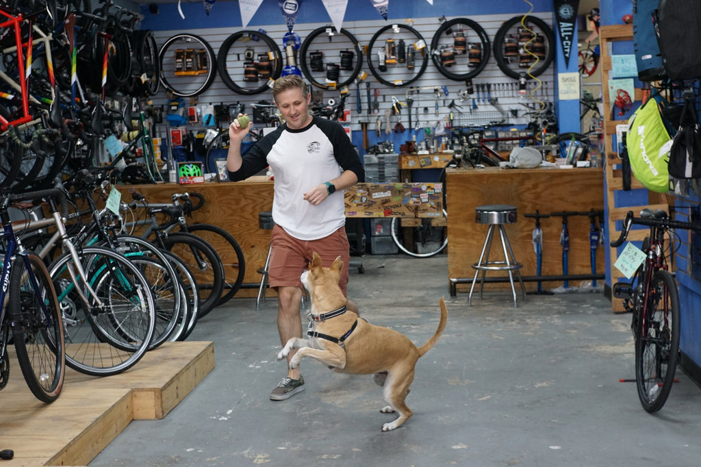 Macey the Guard Dog | City Bike Tampa