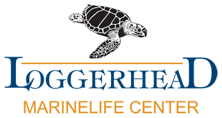 save the turtles, turtle conservatory, turtle jewelry, turtle donations