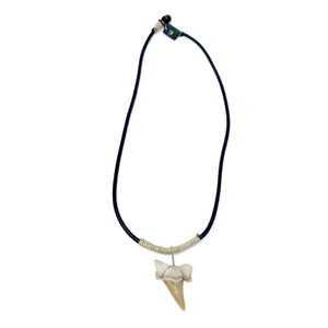charming shark fossil sharks tooth necklace