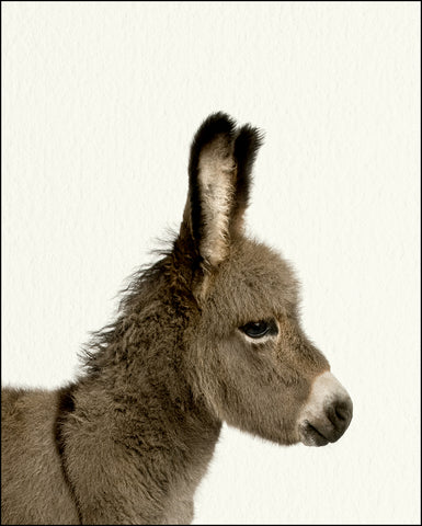 An image of a(n) Farm Baby Donkey inspired Baby Animal Print.