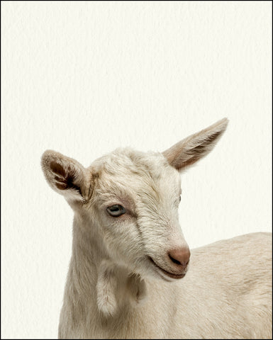 An image of a(n) Farm Baby Goat inspired Baby Animal Print.