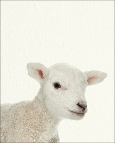 An image of a(n) Farm Baby Lamb inspired Baby Animal Print.
