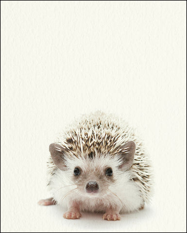 An image of a(n) Woodland Baby Hedgehog inspired Baby Animal Print.