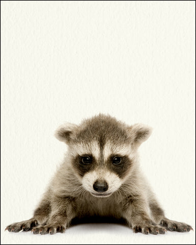 An image of a(n) Woodland Baby Raccoon inspired Baby Animal Print.