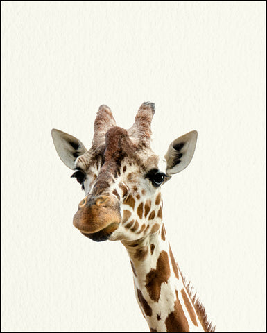 An image of a(n) Zoo Baby Giraffe inspired Baby Animal Print.