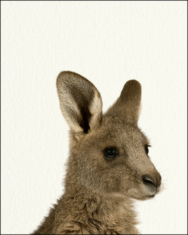 An image of a(n) Zoo Baby Kangaroo inspired Baby Animal Print.