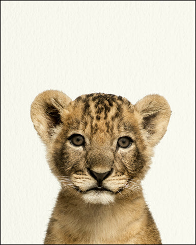 An image of a(n) Zoo Baby Lion inspired Baby Animal Print.
