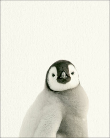 An image of a(n) Zoo Baby Penguin inspired Baby Animal Print.