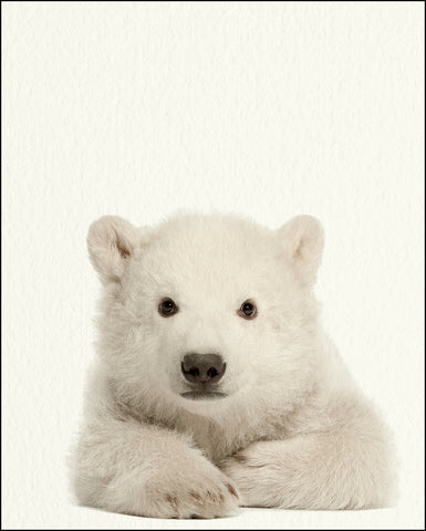 An image of a(n) Zoo Baby Polar Bear inspired Baby Animal Print.