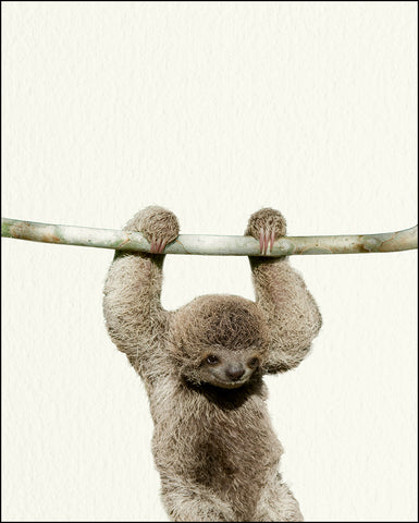 An image of a(n) Zoo Baby Sloth inspired Baby Animal Print.