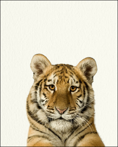 Animal Pictures To Print