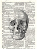 An image of a(n) Human Skull Dictionary Art Print.