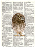 An image of a(n) Owl with Monocle Dictionary Art Print.