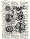 An image of a(n) Jellyfish Dictionary Art Print.