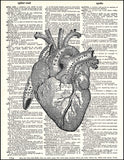 An image of a(n) Anatomical Heart Dictionary Art Print.