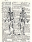 An image of a(n) Human Skeleton Dictionary Art Print.