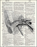 An image of a(n) Human Ear Dictionary Art Print.