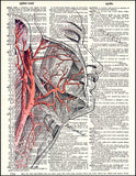 An image of a(n) Human Face and Arteries Dictionary Art Print.