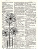 An image of a(n) Three Dandelions Dictionary Art Print.