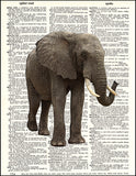 An image of a(n) African Elephant  Dictionary Art Print.
