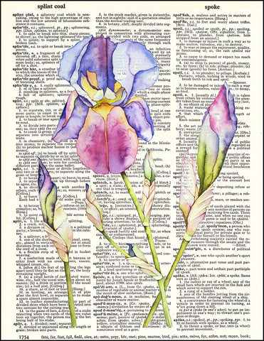 An image of a(n) Iris Watercolor Dictionary Art Print.