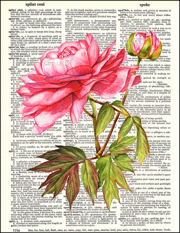 An image of a(n) Pink Peony Dictionary Art Print.