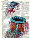 Jellyfish Triptych 01 - Dictionary Art Print