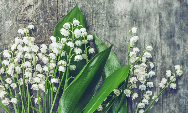 Lily Of The Valley Car Freshener - Candles Sniffs & Gifts