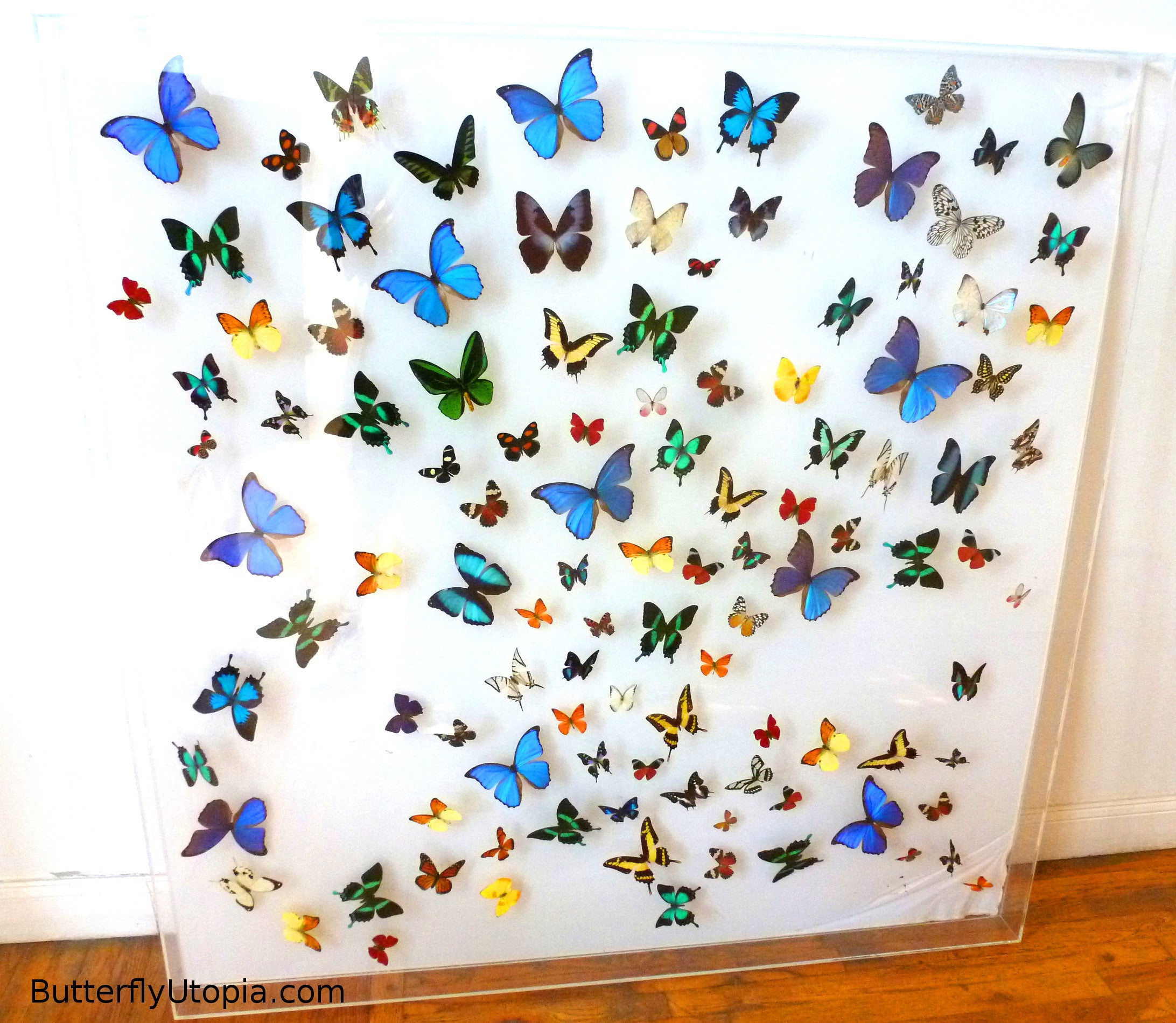 Butterfly Burst framed art, pictures, display,