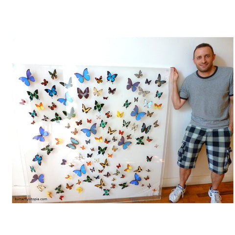 large butterfly wall art frame