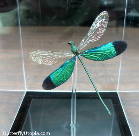 Metallic Green Damselfly- 3D Tabletop Display