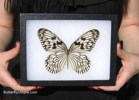 Framed Rice Paper Butterfly