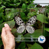 Rice Paper Idea butterfly