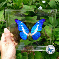 Most beautiful butterfly in world