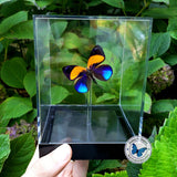 orange blue seascape butterfly