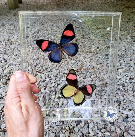 framed pink yellow butterflies