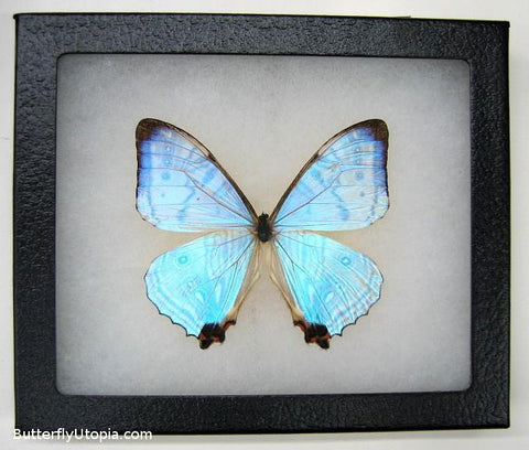 hologram pearl lympharis butterfly bargain quality