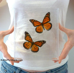 3D Monarch Butterflies