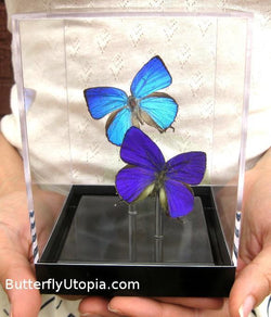 Custom Pair Butterflies
