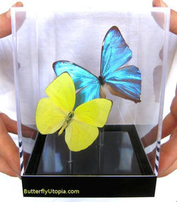 Blue Yellow Butterflies
