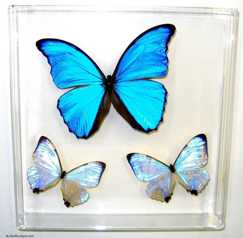 Cosmic Blue Butterflies