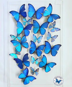 pretty blue butterflies