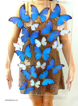 Supreme Blue Butterflies