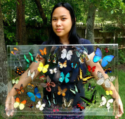 colorful real butterflies